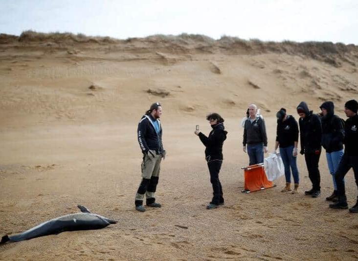 Delfines muertos llegan a las costas francesas en cifra récord