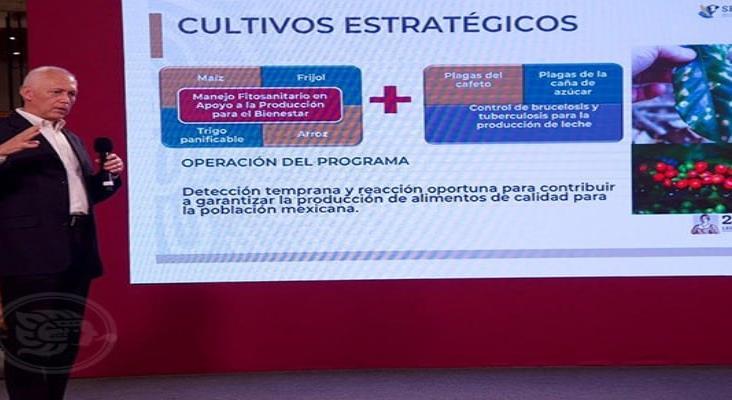 Tecnología y sanidad, claves para la transformación del campo mexicano: Agricultura
