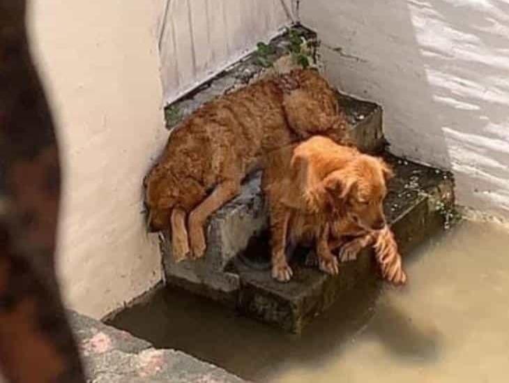 Rescatan a perrito abandonado, su hermano muere