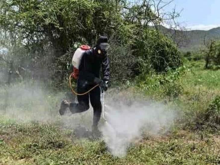 Prohibidos en varios países, los cinco plaguicidas más usados en México