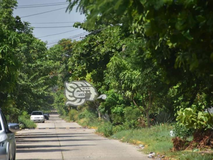 Colonos piden apoyo para retirar maleza de avenidas