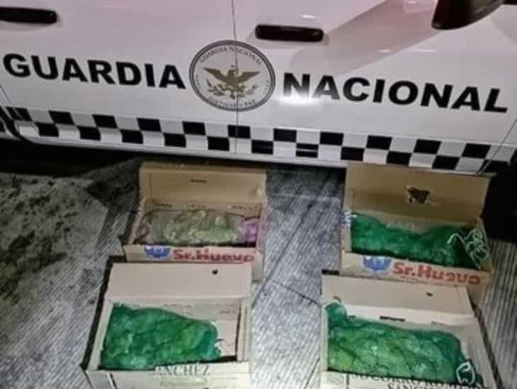 Rescatan a 60 ejemplares de loros transportados ilegalmente a Puebla