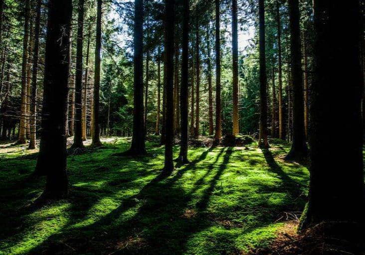 La mitad de la Tierra está casi intacta de la influencia humana