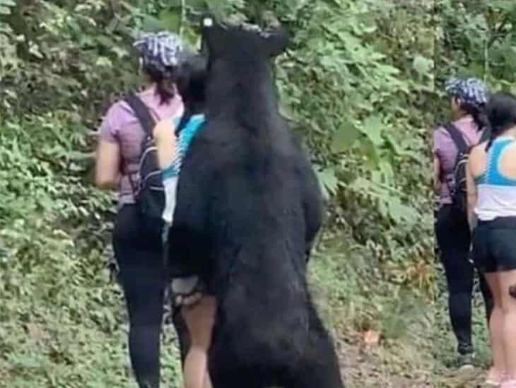 Juntan firmas para evitar que oso de Chipinque vaya a zoológico