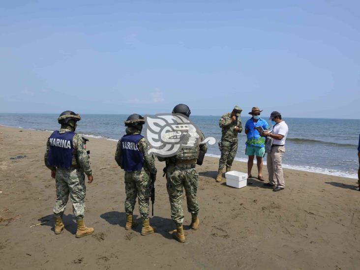 Profepa libera a 18 tortugas Lora en playas de Coatzacoalcos