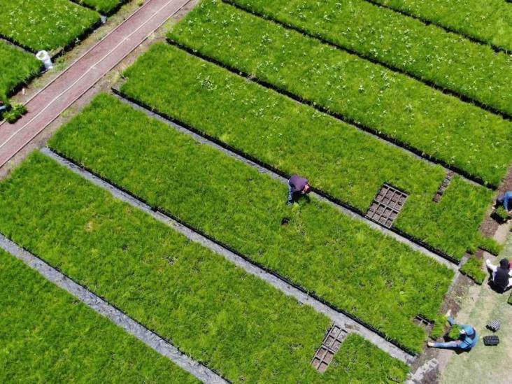 Se han plantado 10 millones de árboles y plantas en CDMX