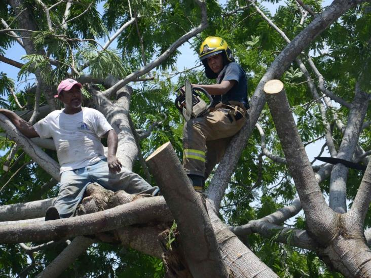 Lluvias en puerto de Veracruz deja como saldo un árbol caído y varios daños