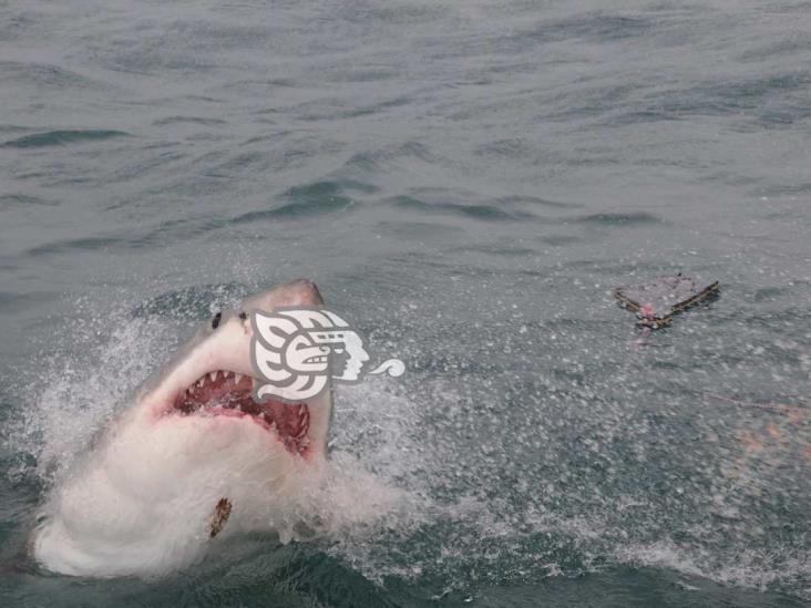 México en alerta por piratas chinos que amenazan a tiburón blanco