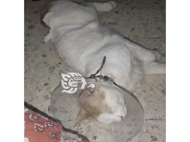 En Nanchital, con pistola de balines sujeto agrede a mascotas