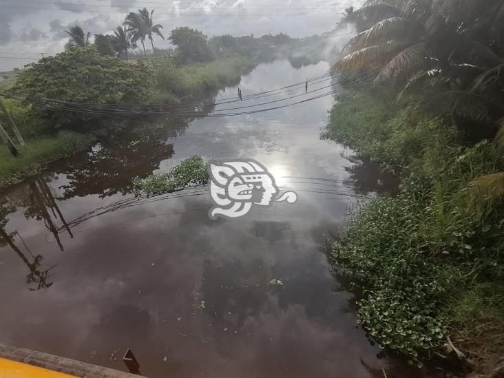 Reaparecen cangrejos en arroyo Tepeyac; piden proteger especie