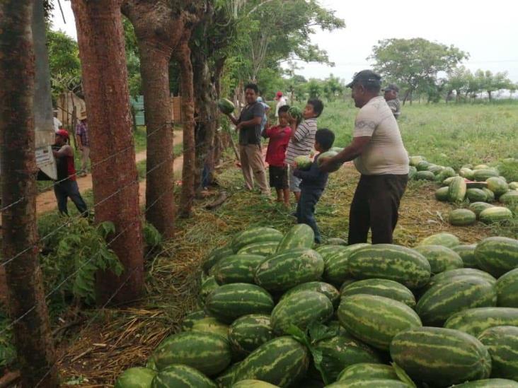 Comercializarán sandías de San Juan a bajo costo en Coatzacoalcos