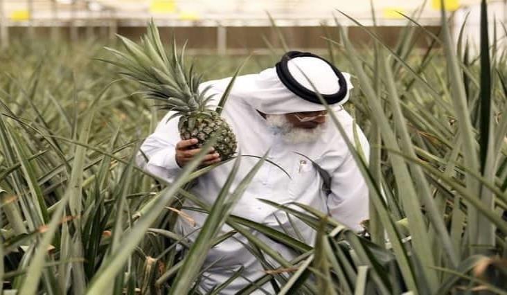 """Protagoniza Dubai una """"revolución agrícola"""" en medio del desierto"""