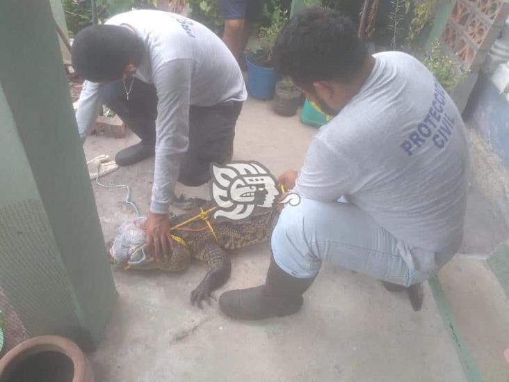 Familia de Agua Dulce entrega a PC un cocodrilo que tenían de mascota