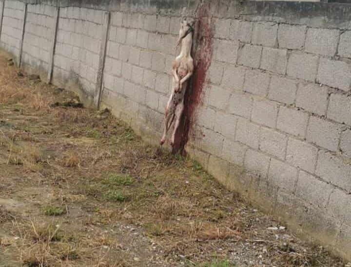 Investigan muerte de mascota en Tuxpan