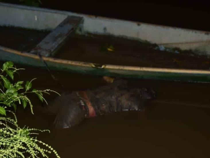 Hallan cuerpo de hombre flotando en aguas del Río Cotaxtla