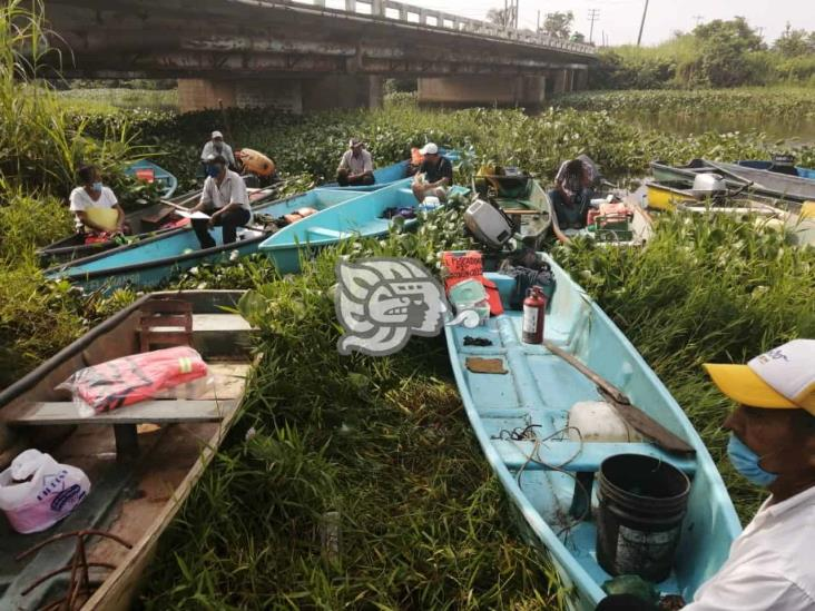 Lirio en más de 5 kilómetros frena labores de pesca