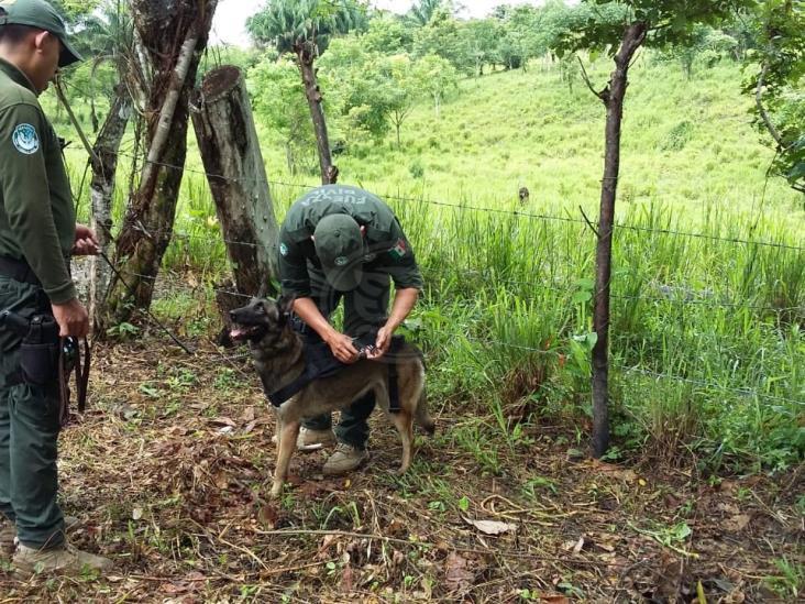 Buscan fosas clandestinas en ranchos del sur de Veracruz