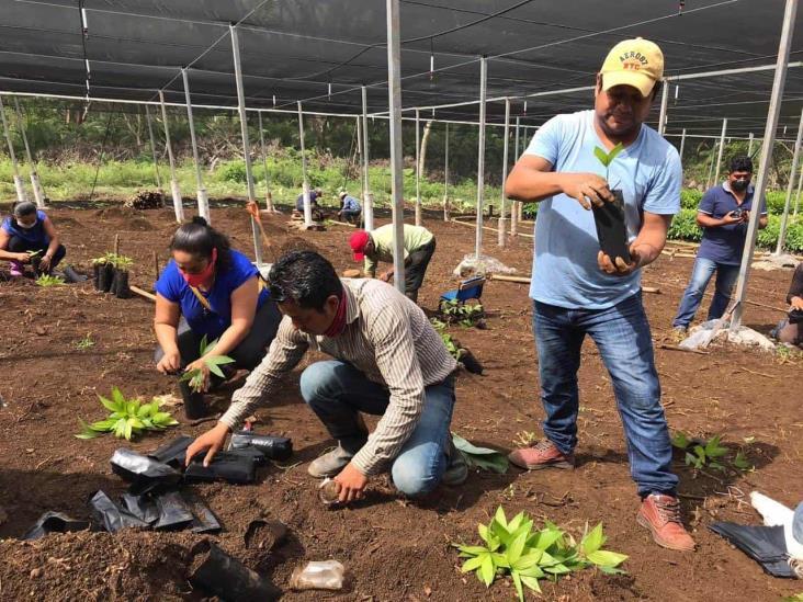 Viveros en Catemaco generarán más de 300 empleos: Sedarpa