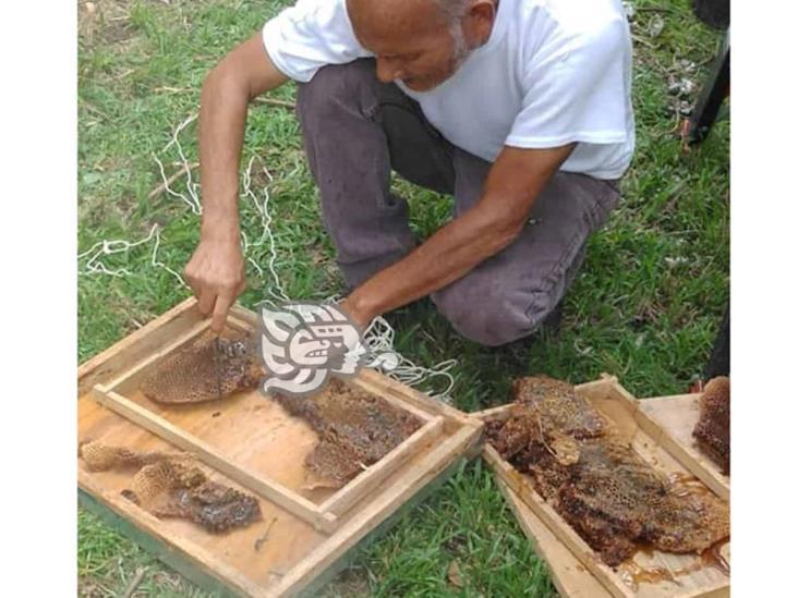 Personal de PC capturó un panal de abejas en CETMAR