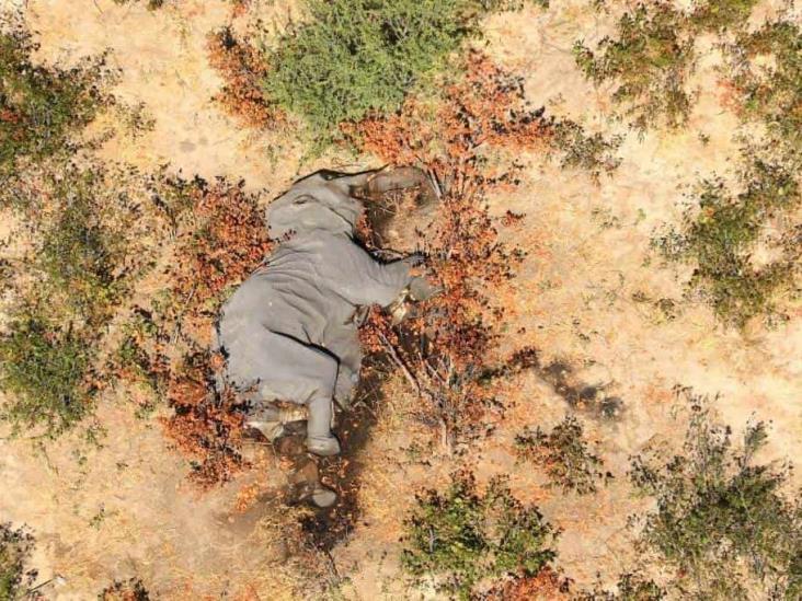 Cianobacterias envenenan a más de 300 elefantes en Botswana