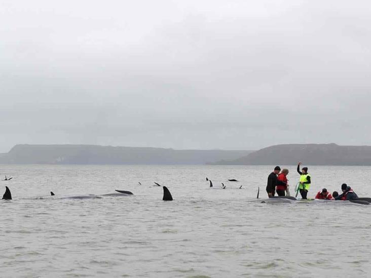 Mueren casi todas las ballenas encalladas en Australia