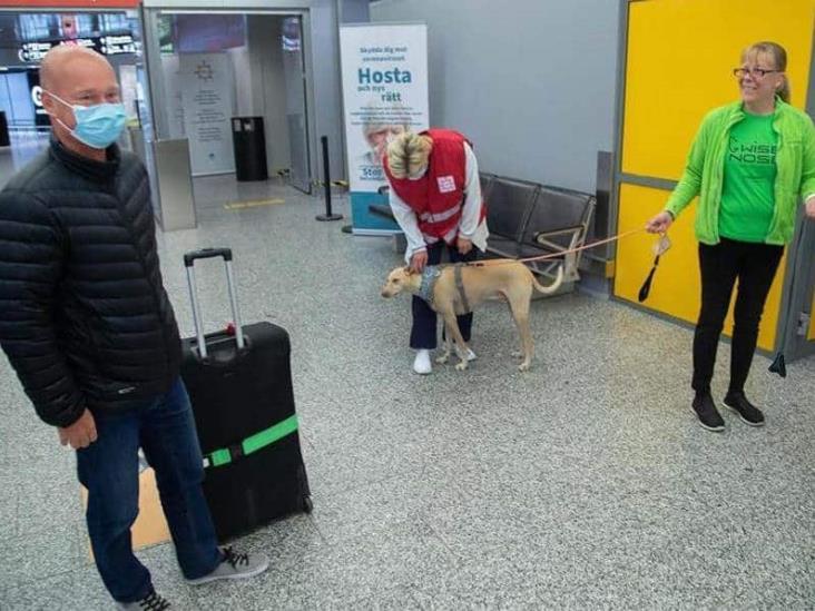 Aeropuerto en Finlandia usaría perros adiestrados para detectar covid-19