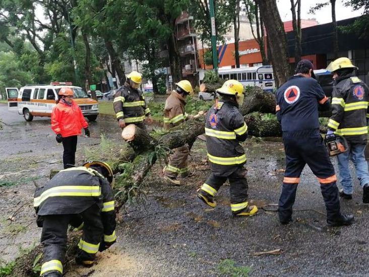 Caída de árboles y postes por FF 4 en Xalapa