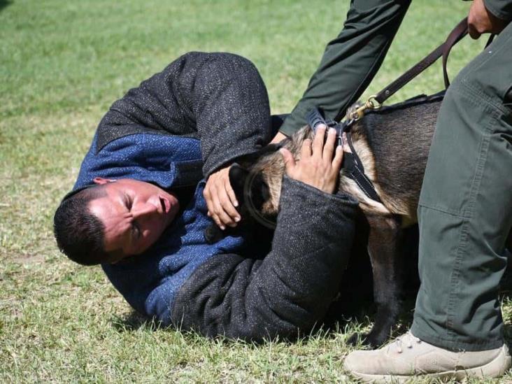 Compañía canina participa en búsqueda de personas: SSP