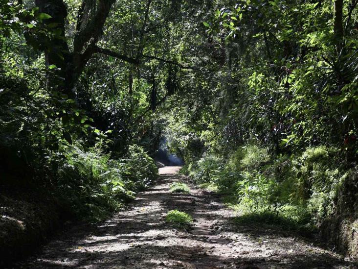 Juez ordena a Sedatu y a CIAOC parar devastación de bosque de Veracruz