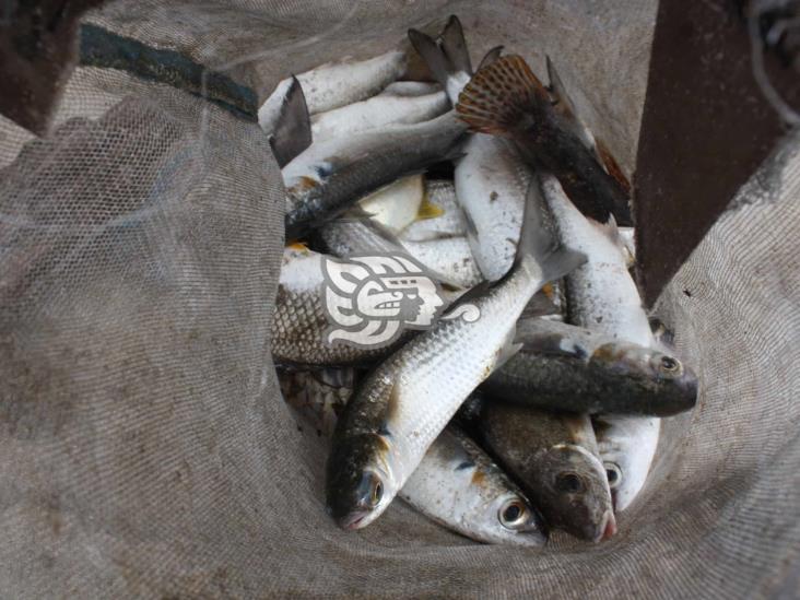 Por altos niveles en ríos, adelantan pesca del topen en Las Choapas