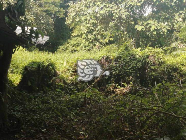 Por posibles picaduras de la mosca chiclera, recorren Ixhuatlán del Sureste