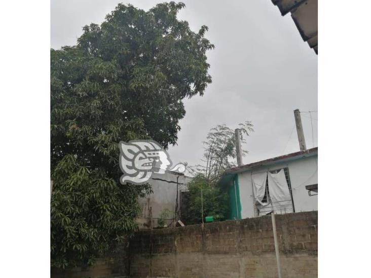 Piden apoyo por peligroso árbol a punto de caerse en Coatzacoalcos