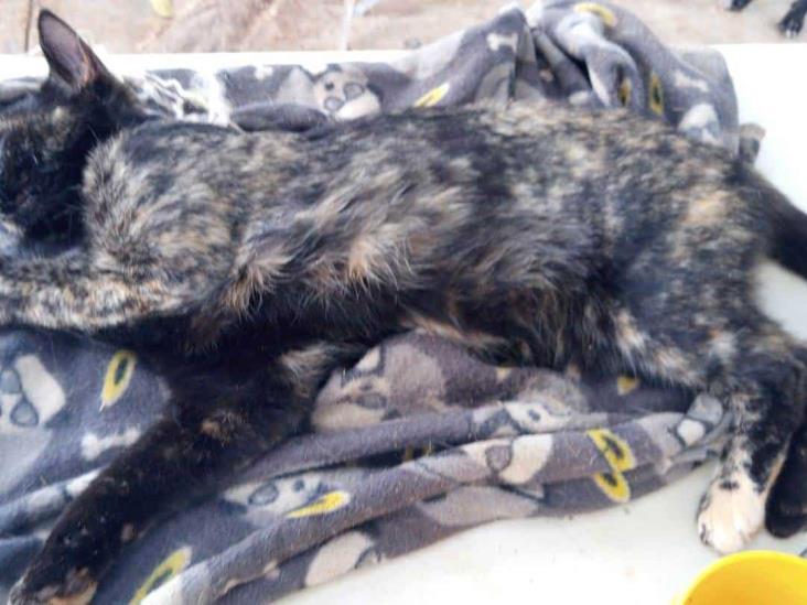 Envenenan gatos en colonia Salvador de Allende de Acayucan
